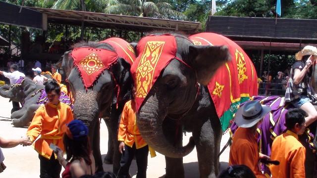 Шоу слонов в парке Нонг Нуч