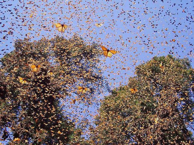 Долина бабочек Родос Греция