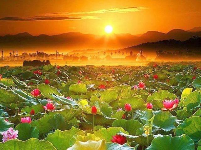 Озеро Лотосов Муйне Вьетнам