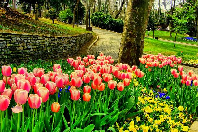 Парк Гюльхане Стамбул Турция