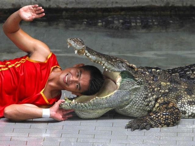 Крокодиловая ферма в Паттайе Таиланд