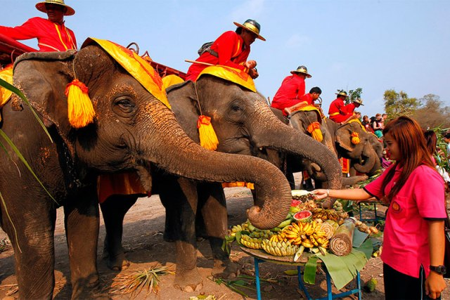 Слоны Таиланда
