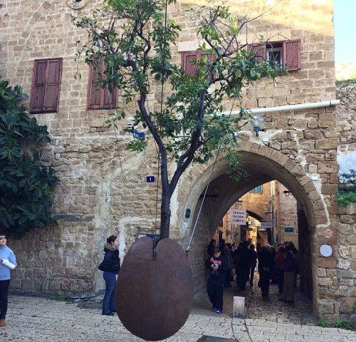 Апельсиновое дерево Тель-Авив Израиль