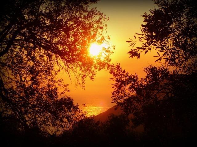 Оливковые сады на Корфу