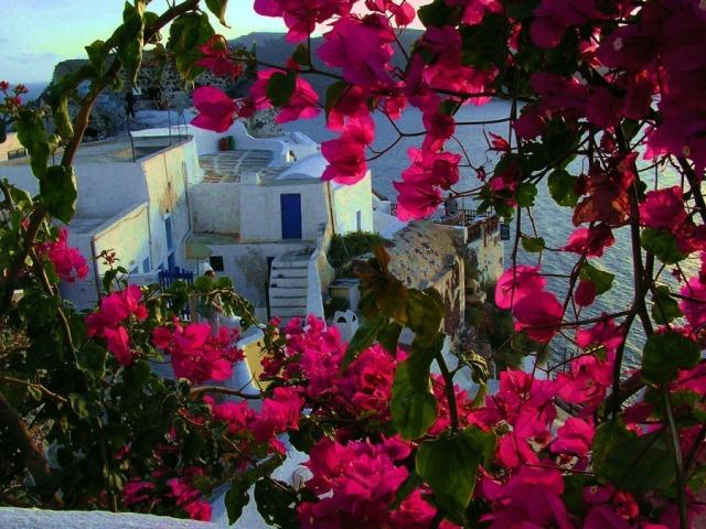 Цветы на Санторини