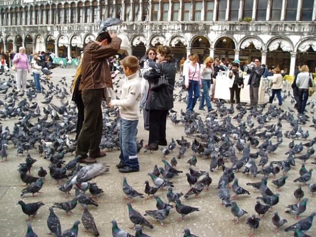 Голуби на площади Св. Марка