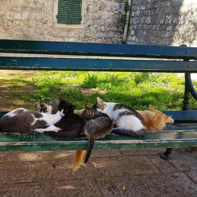Котор - город котов