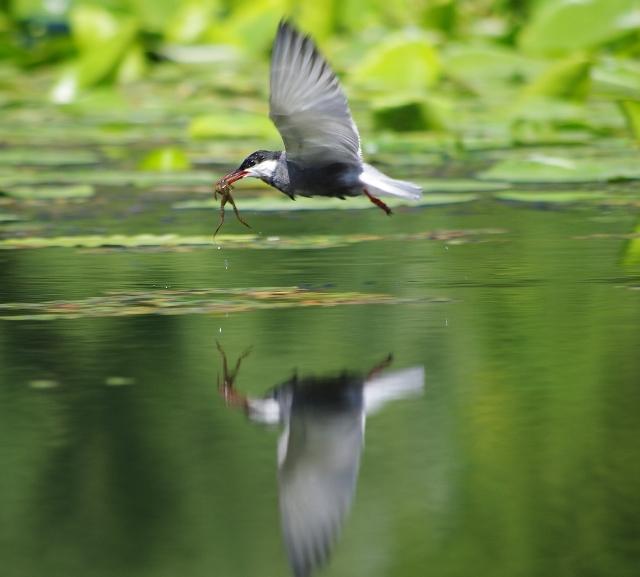 На озере рай для орнитолога