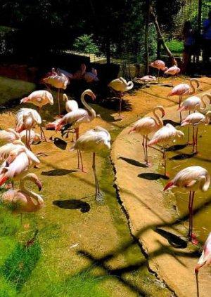 Фламинго в Стамбульском зоопарке