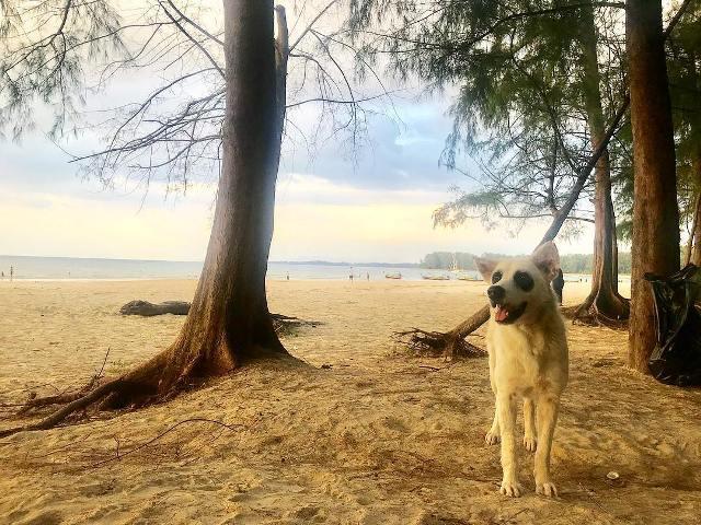 Пляж Най Янг, Пхукет, Таиланд
