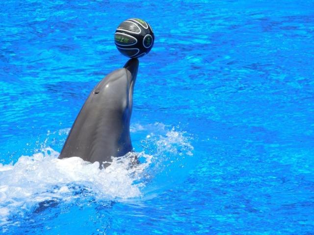 Дети будут в восторге от дельфинария