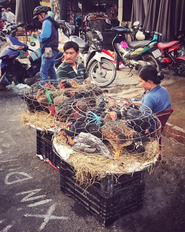 Живая птица на рынке