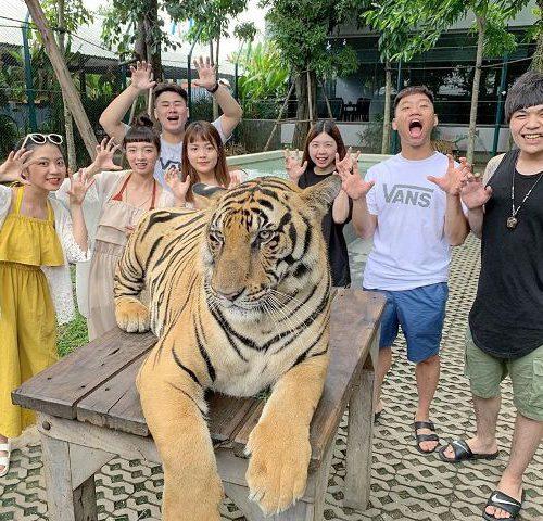 Парк тигров в Паттайе
