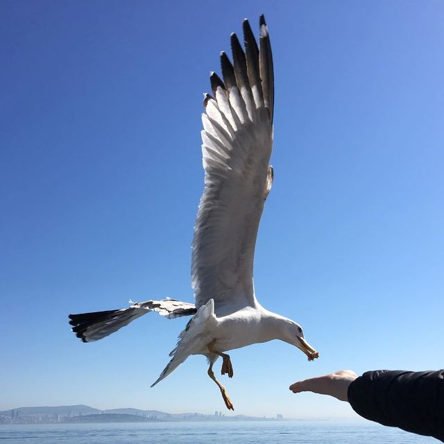 Чайки над Босфором