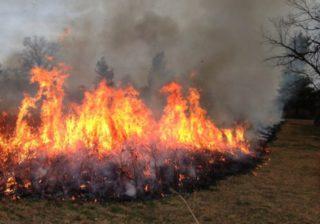 Пожары в Крыму