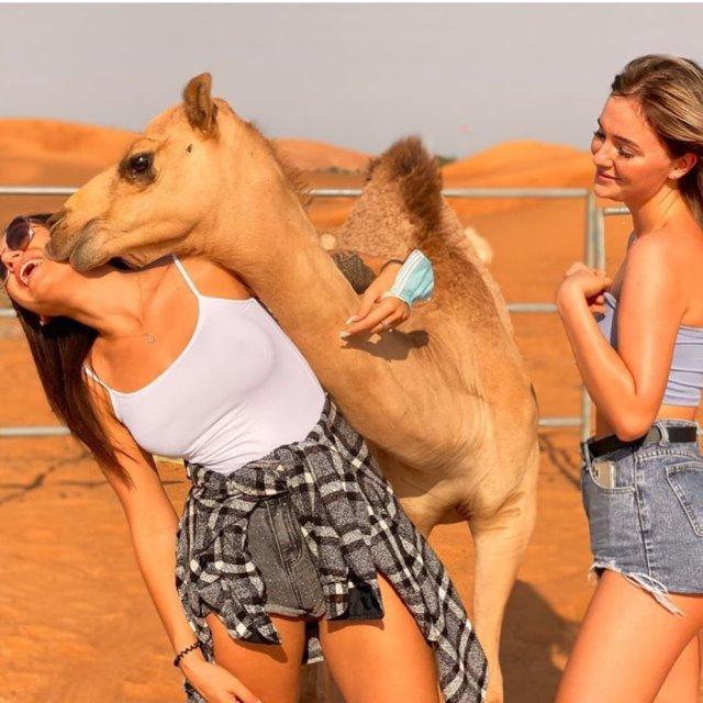 Верблюды любят красивых девушек