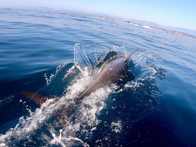 Дельфины в ОАЭ
