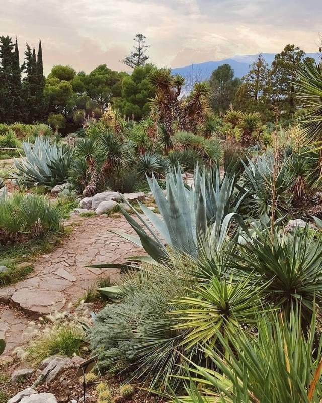 Мексика в Никитском ботаническом саду