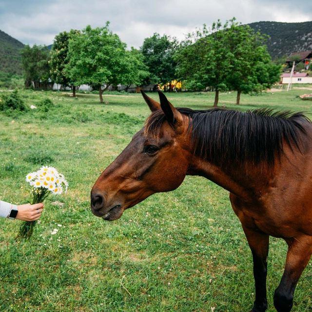 Лошади в селе Колхозное
