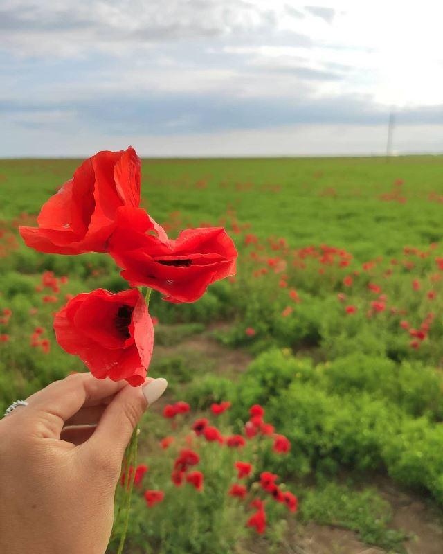 Маки цветут в Крыму
